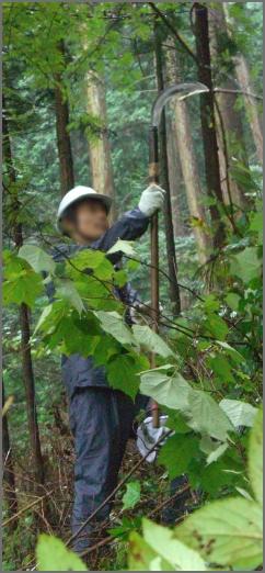 2009年 田中林業多摩森林